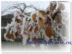 Зимний день в Донецке